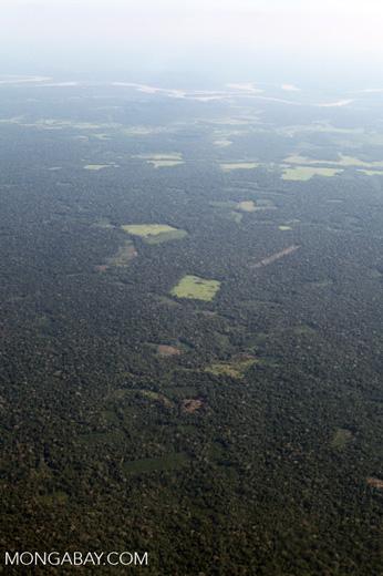 mosaic deforestation in the Amazon