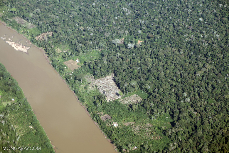 Aerial picture of cattle pasture cleared along a river in the Peruvian Amazon