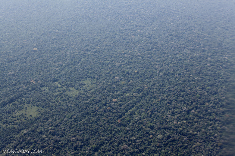 Aerial view of selectively logged forest in Peru