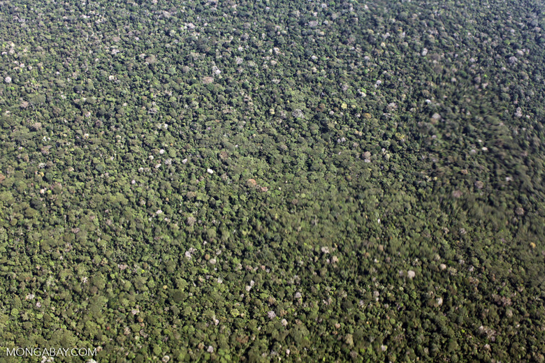 Aerial image of the broccoli-like structure of the Amazon rainforest canopy