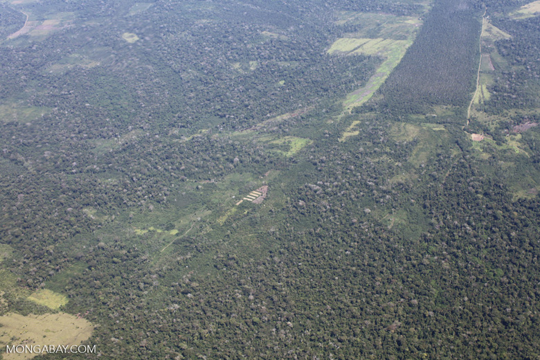 Area of swamp forest left amid cattle pasture in the Peruvian Amazon