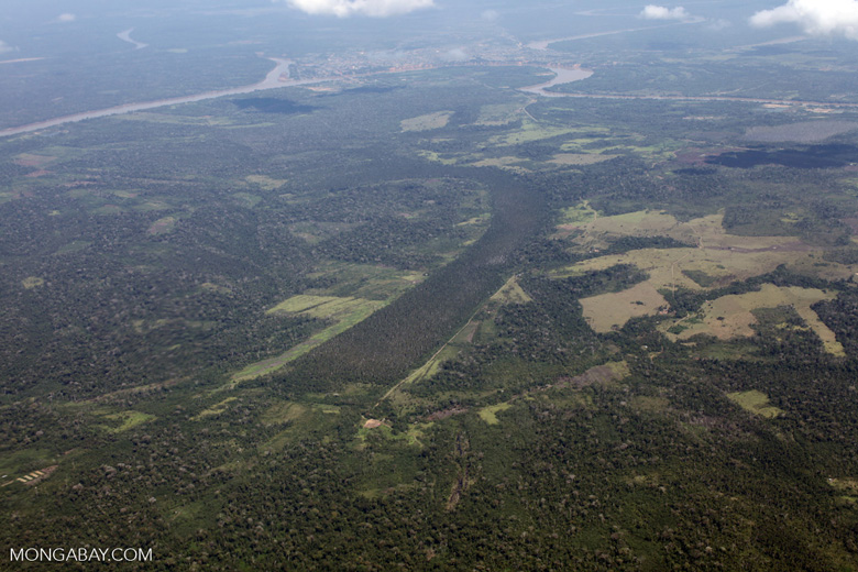 Area of swamp forest left amid cattle pasture in the Peruvian Amazon [peru_aerial_0632]