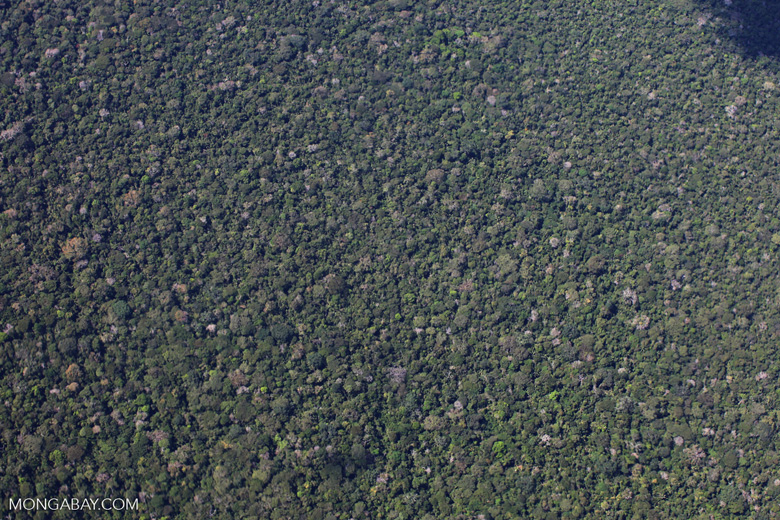Aerial photo of lowland rainforest in Peru's Amazon