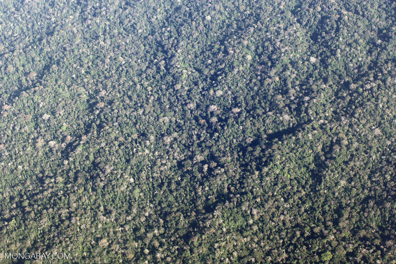 Aerial view of rugged forest terrain in the Western Amazon of Peru