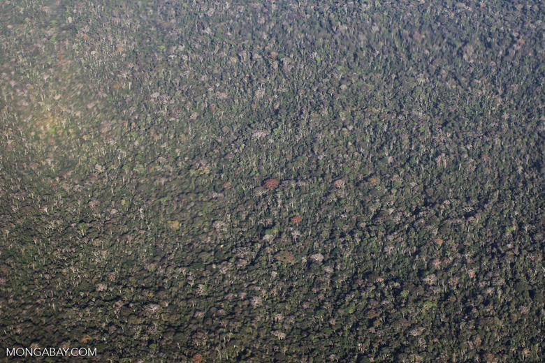 Aerial view of the rainforest canopy in the Ucayali department of the Peruvian Amazon