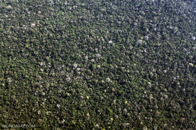Logged over forest in the Peruvian Amazon [peru_aerial_0995]