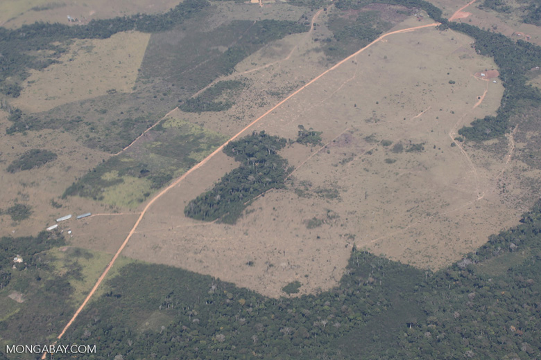 Large-scale deforestation for cattle pasture in the Peruvian Amazon