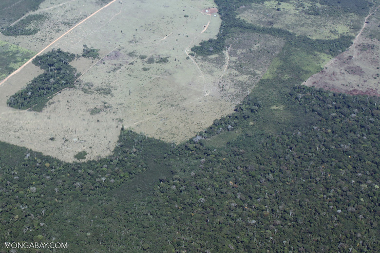 Large-scale forest clearing for cattle ranching in the Peruvian Amazon