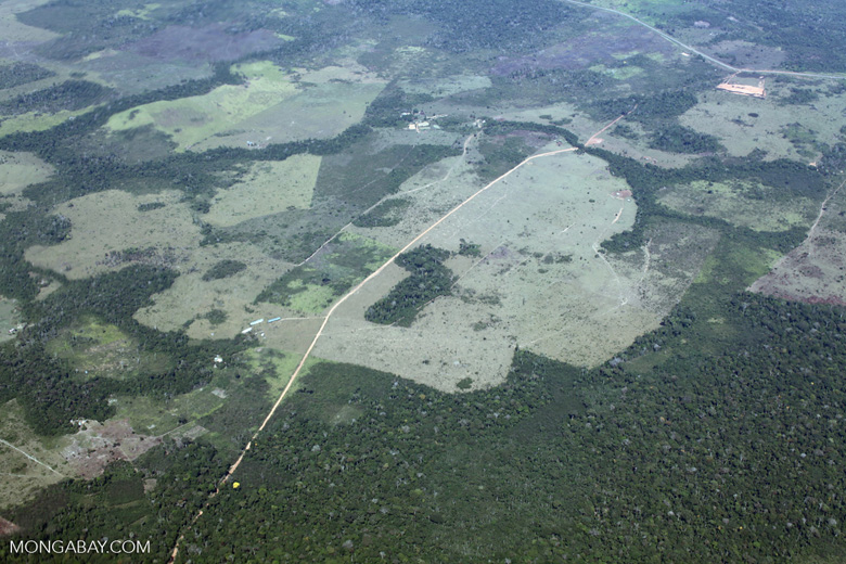 Large-scale deforestation for ranching in the Peruvian Amazon