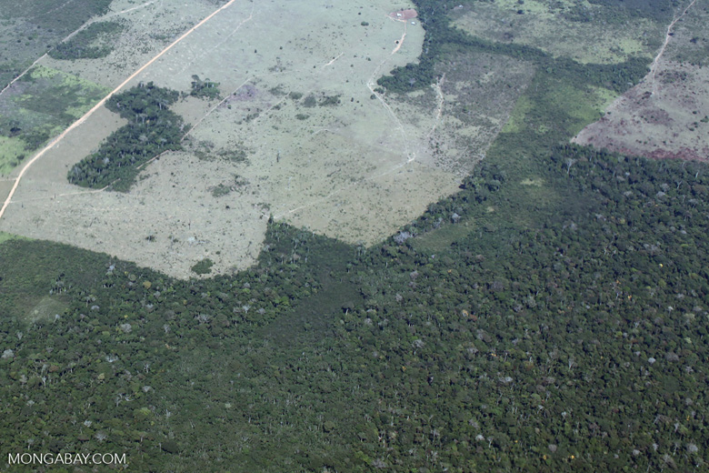 Aerial picture of large-scale forest clearing for cattle pasture in the Peruvian Amazon