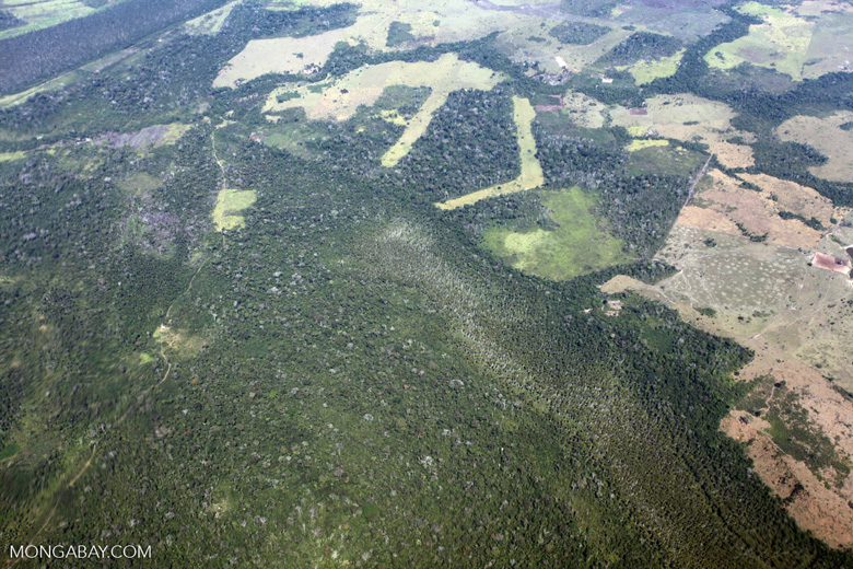 Amazon landscape scarred by clearing for cattle pasture [peru_aerial_1239]