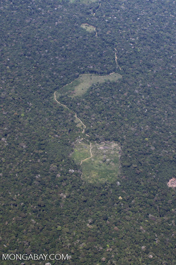 Deforestation for cattle ranching [peru_aerial_1381]