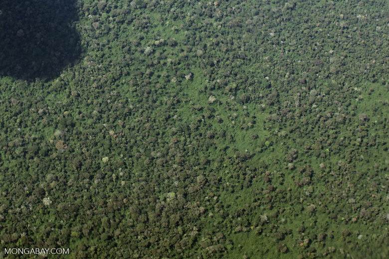 Logged-over rainforest in the Amazon