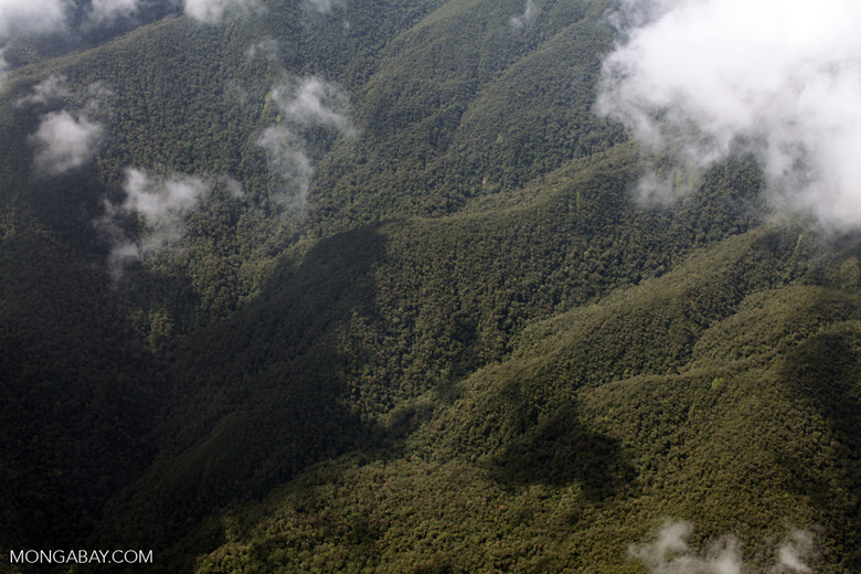 Cloud forest in the Amazon basin [peru_aerial_1682]