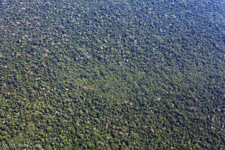 Plane view of the rainforest of the Amazon basin