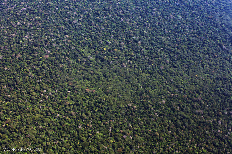 Aerial view of Amazon basin rain forest