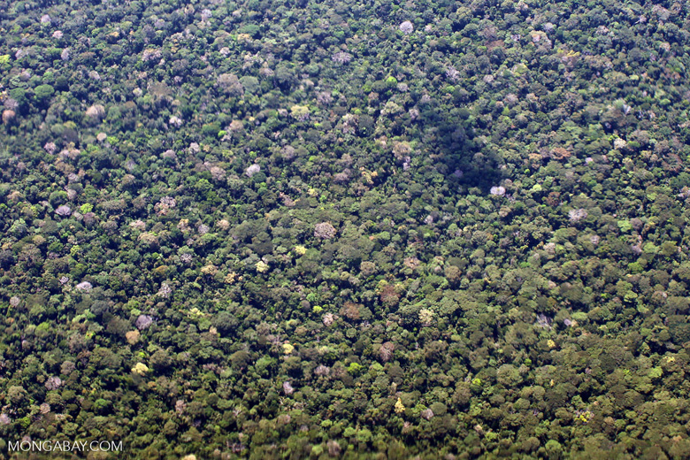 Looking down from an airplane at Amazon basin rain forest