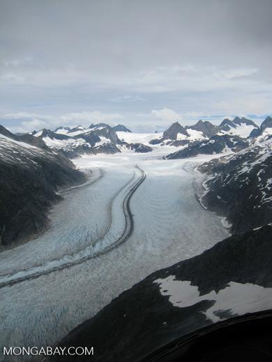 Mendenhall glacier. Photo by Rhett A Butler