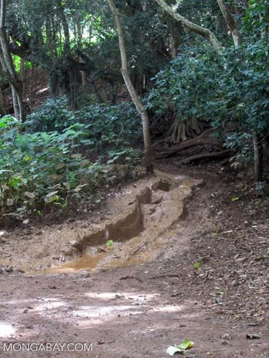 Deep mud on a road in Kauai