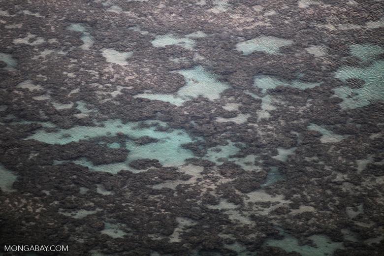 Reef in Hawaii