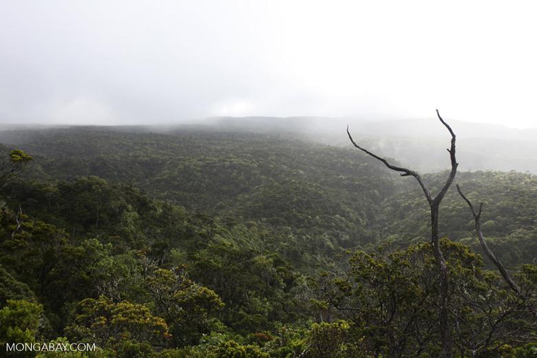 Alaka'i Swamp Forest