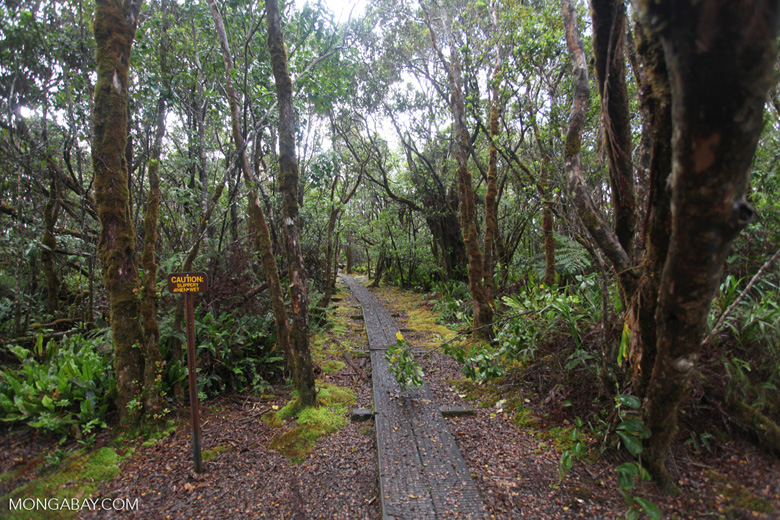 Alaka'i Swamp Trail