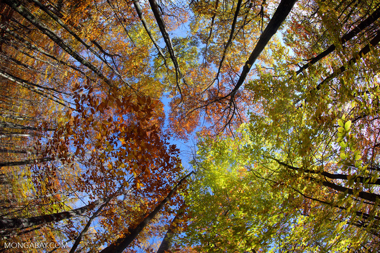 10 facts about forests for International Forest Day
