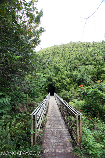 Bridge into the bamboo forest