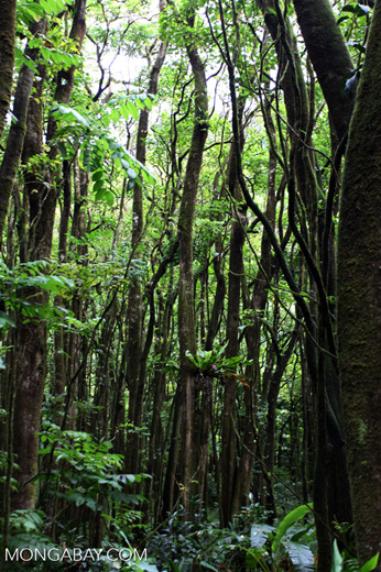 Rainforest along the Hana Highway
