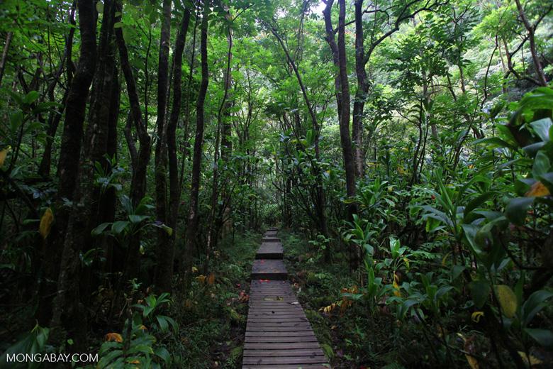 Path through Haleakala forest