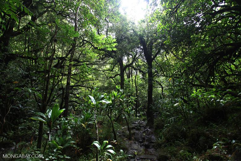 Haleakala forest