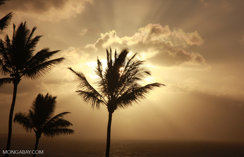 Palm tree at sunrise