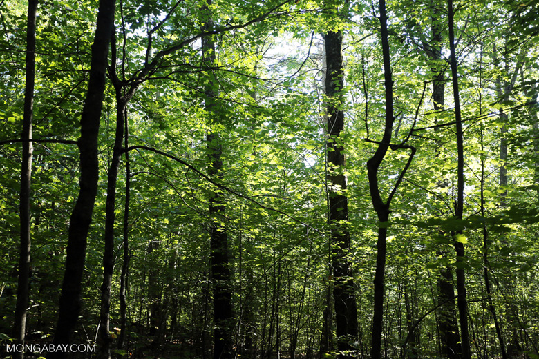 Eastern forest
