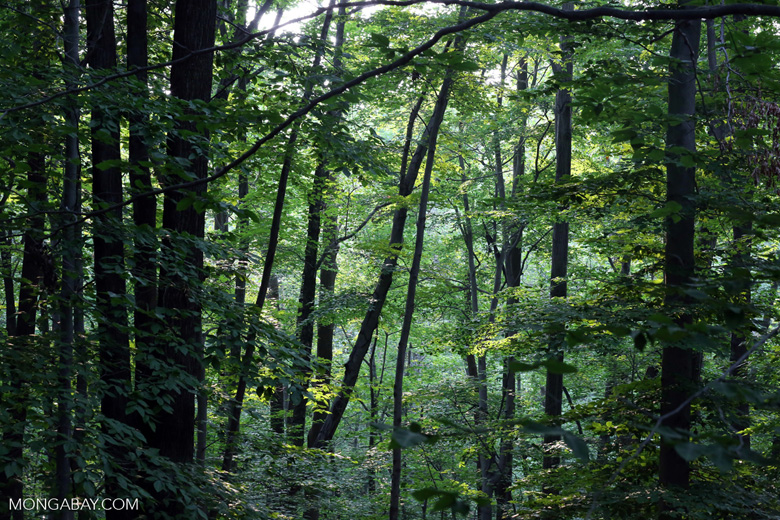 Deciduous forest in New York state