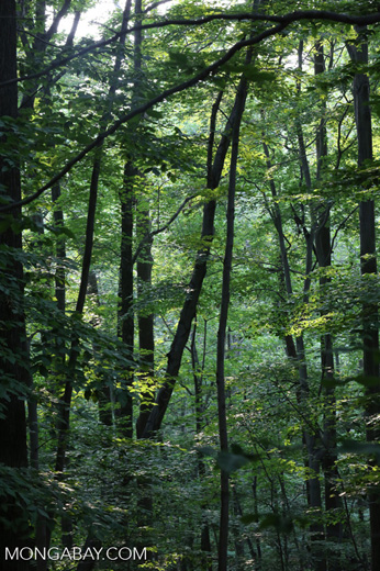 Forest in NY