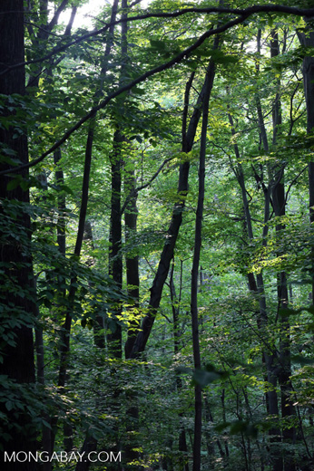 Westchester forest