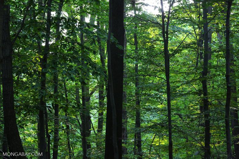 NY forest
