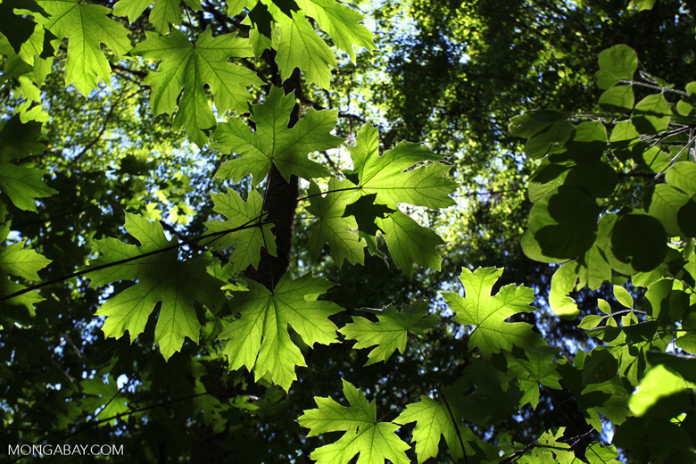 Forest leaves in Ashland