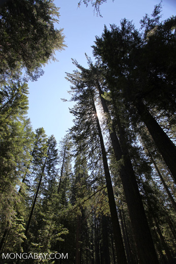 Forest in Crater Lake National Park, the only National Park in Oregon.
