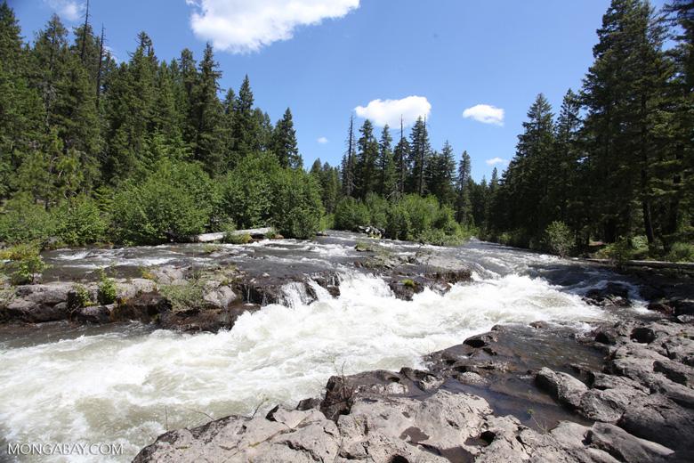 Upper Rouge River