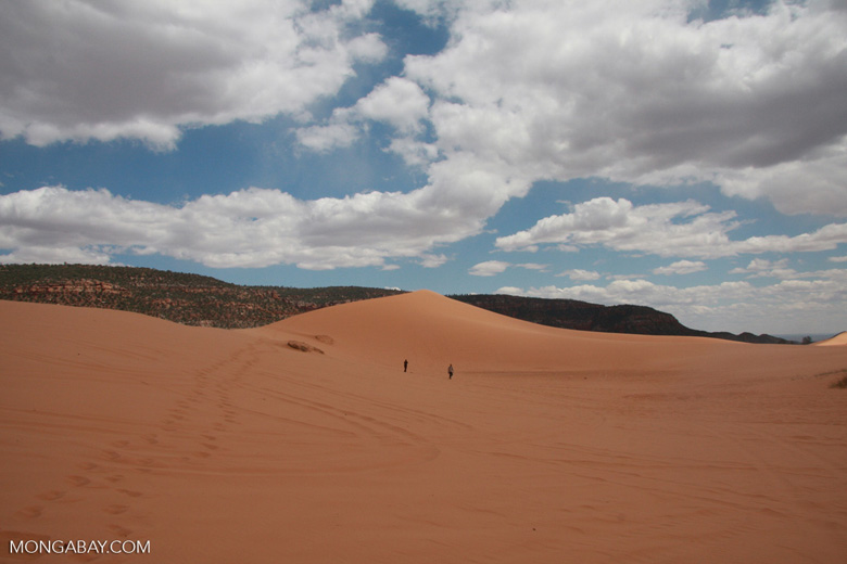 People walking on a sand dune in Coral Pink Sand Dunes State Park