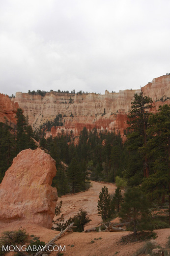 Dry streambed in Bryce Canyon National Park