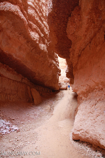 Wall Street section of the Navajo Loop trail