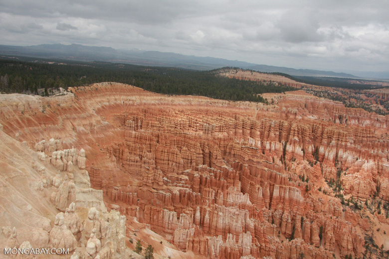 Hoodoos Amphitheater at Bryce Canyon National Park