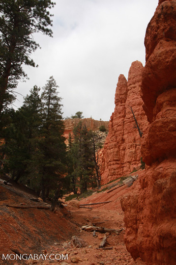 Pink Cliff hike in Dixie National Forest