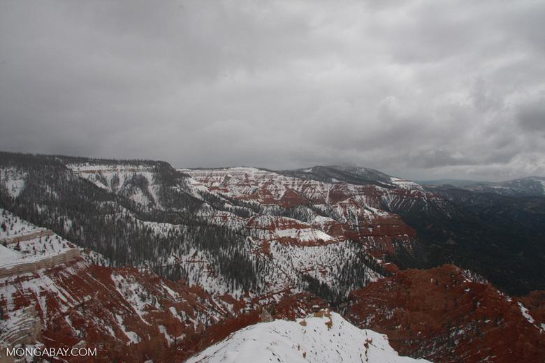Snow-covered hoodoos at Cedar Breaks National Monument