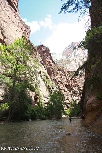 Narrows in Zion National Park, a section of canyon on the North Fork of the Virgin River, beyond the end of the Riverside Walk Trail