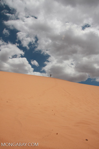 Woman atop a sand dune