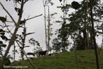 Former rainforest, now cattle pasture [costa-rica-d_0064]