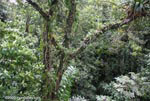 Bromeliads and epiphytes in the rainforest canopy